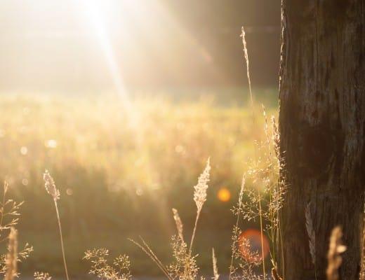 field-summer-sun-meadow